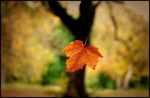 http://www.syzygy.org.uk/wp-content/uploads/2013/10/Falling-leaf-2.jpg