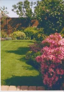 My garden - after