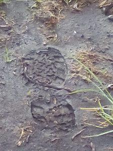 Walking in God's footsteps?